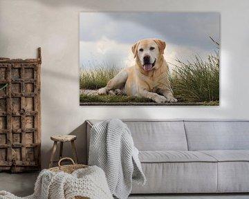 Labrador von Hilda booy