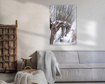 Des saules de Pollard dans un paysage hivernal ! sur Lieke van Grinsven van Aarle