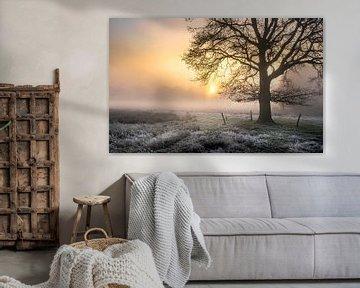 Traubeneiche im Nebel von Peschen Photography