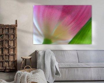 Detail rosa Tulpe von Ad Jekel