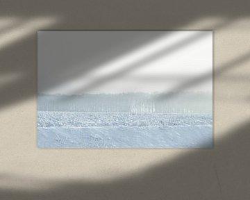 white horizon - winter in Drenthe von Sagolik Photography