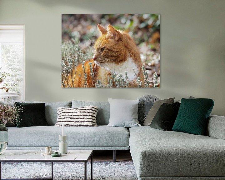 Beispiel: Katze im Lavendel von Katrin May