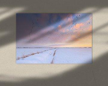 Ganzen vliegen naar hun rustplaats voor de nacht tijdens een mooie zonsondergang in de winter boven  van Bas Meelker