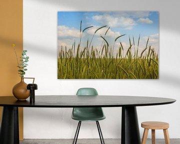 Getreidefeld von Katrin May