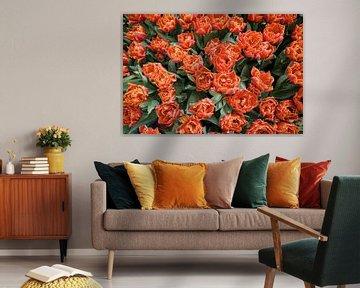 Veld vol tulpen van bovenaf