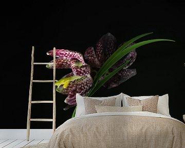 Dambord bloem, Fritillaria meleagris van Katrin May