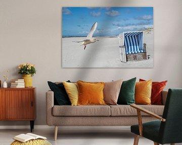 Strandstoel met zeemeeuw op Sylt aan de Noordzee van Animaflora PicsStock