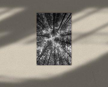 Bomen vanuit een ander perspectief van Coby Bergsma