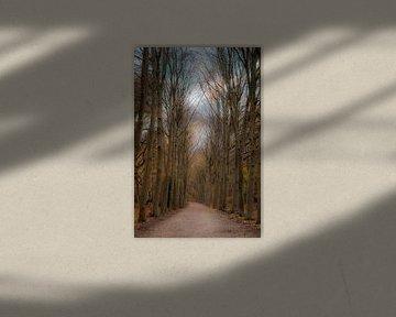 Mit meinem Blick tief in den Wald