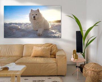 Hund im Schnee von BVpix