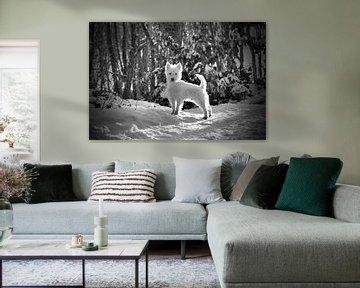 West Highland Terrier Westie im Schnee von Jennifer van den Hurk