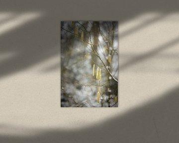 Gelbe Blumen im Winter | Schnee im Wald | weiße Farben | Winterfoto von Karijn | Fine art Natuur en Reis Fotografie