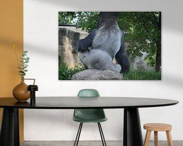 Bokito Silberrücken-Gorilla aus dem Zoo Blijdorp von Studio Maria