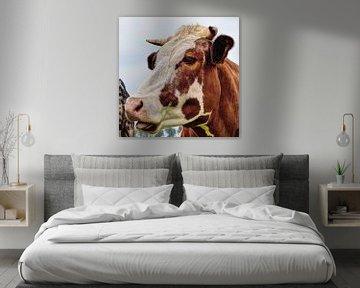 Roodbont koe in de wei van Hendrik-Jan Kornelis