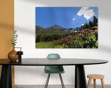 Alpenrozen op de Hirzer in de Sarntaler Alpen van Martina Weidner