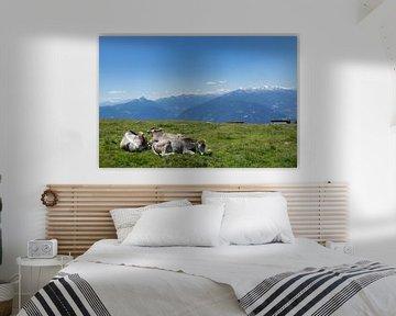 Rustende koeien in Zuid-Tirol van Martina Weidner