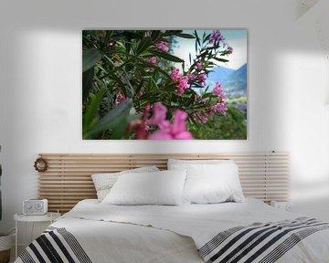 Oleander in Merano van Martina Weidner