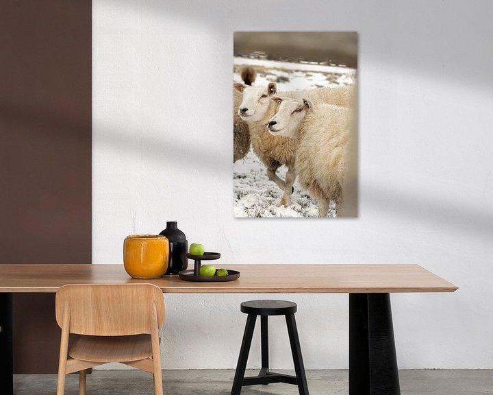 Beispiel: Neugierige Schafe an einem Wintertag von HappyTravelSpots