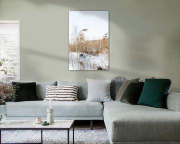 Mooi belicht palmgras op een winterse dag van HappyTravelSpots