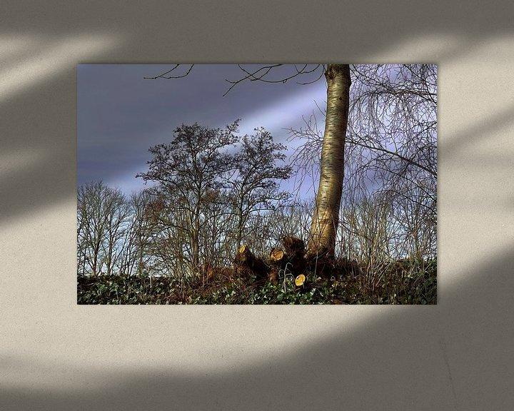 Sfeerimpressie: Boom in het voorjaar gesnoeide takken van ellenilli .