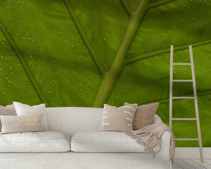 Beispiel fototapete: Grünes Blatt von Katrin Engl
