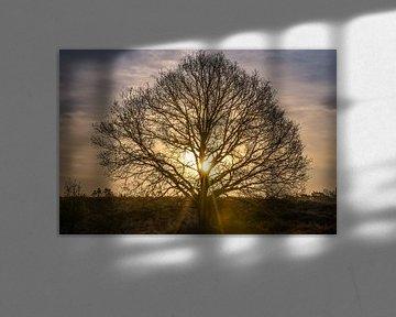 gouden boom van Tania Perneel