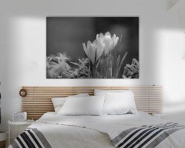 Blumen Teil 52 von Tania Perneel