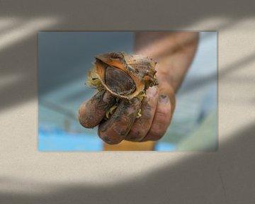Visser met schelp van Stefania van Lieshout
