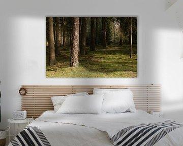 Ein Wald von Ewan Mol