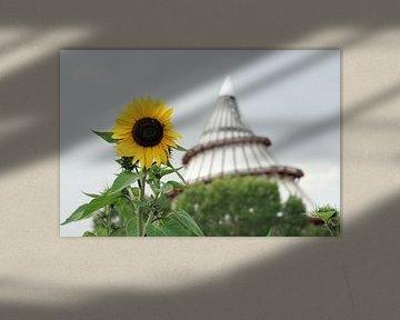 Sonnenblume und Jahrtausendturm in Magdeburg von Heiko Kueverling