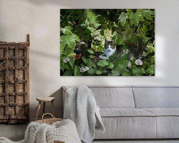 Katze im Garten von Marijke van Loon