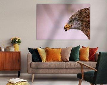 Porträt eines Rotmilans von Robin Scholte
