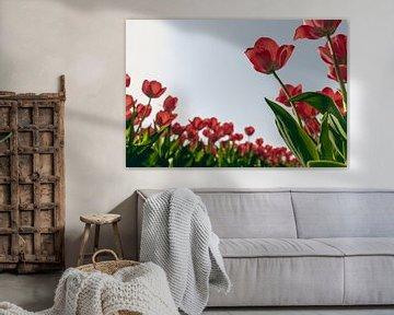 Rode Tulpen in het Voorjaar (1/2) van Sophia Eerden