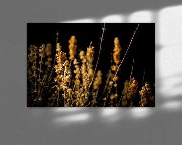 Arid On Black van Urban Photo Lab