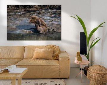 Beaver sur Jasper Los