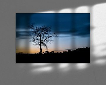 Silhouet van een boom