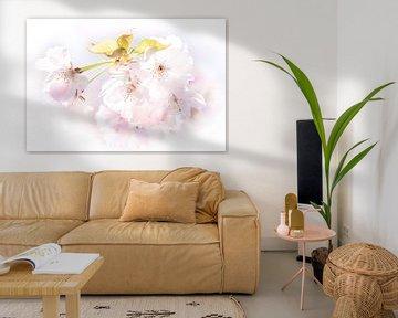 Makro Weisse Kirschblüte von Dieter Walther