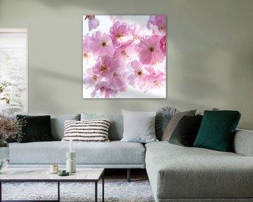 Makro rosa Kirschblüten mit Bokeh und Vignette von Dieter Walther