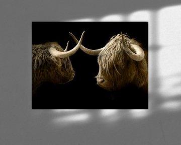 Schotse hooglanders 2 portretten van Humphry Jacobs