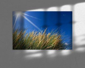 Dünengras von BVpix