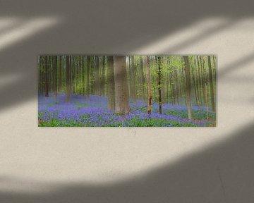 Fleurs de campanules sur le sol de la forêt au printemps sur Sjoerd van der Wal