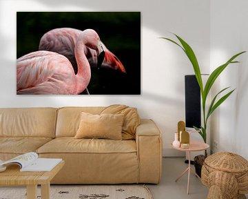 Flamingos von De fotograafer