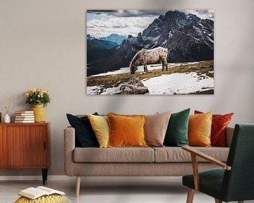 Pferd hoch oben in den Bergen von StephanvdLinde