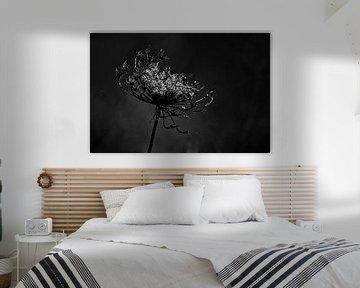 Ausblühen in Schwarz und Weiß von Joke Beers-Blom