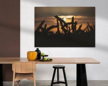 Silhouette d'un grain sur StephanvdLinde