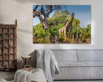 Moeder en dochter giraffe van Erik Verbeeck