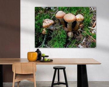 Mushrooms von Tomas S.