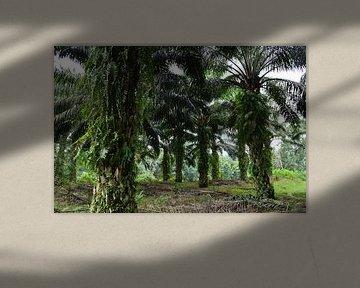 Olie palmen van Esther Kruik