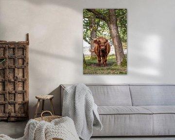 Schottische Highlander-Kuh zwischen den Bäumen von KB Design & Photography (Karen Brouwer)