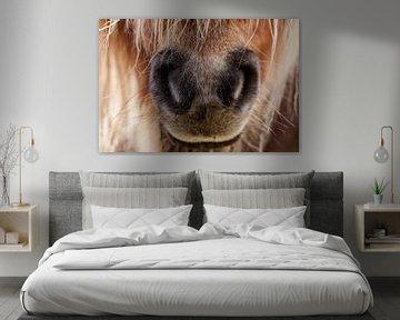 Niedliche Pony-Schnauze (Nase) eines Shetlanders von KB Design & Photography (Karen Brouwer)